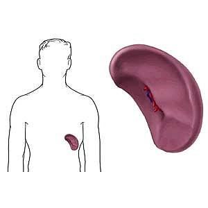 гемоглобин для чего