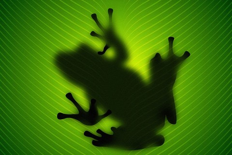 Как зимует лягушка картинки