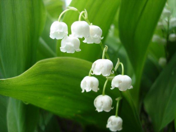 Разное → какие растения занесены в