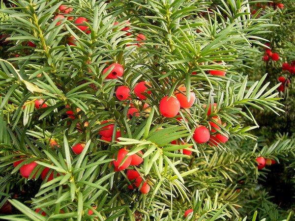 Растения занесены в красную книгу