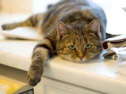 Как принять роды у кошки?