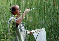 Кто такой энтомолог и чем он занимается?