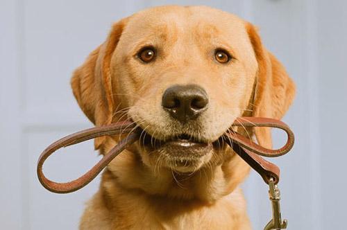 породы собак фото самые умные