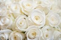 К чему дарят белые розы?