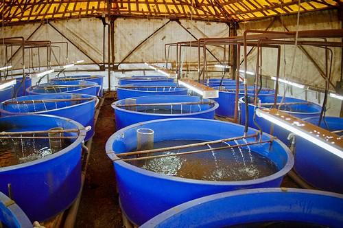 Разведение рыб в домашних условиях - интересное и 38