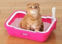Запор у кота - что делать?