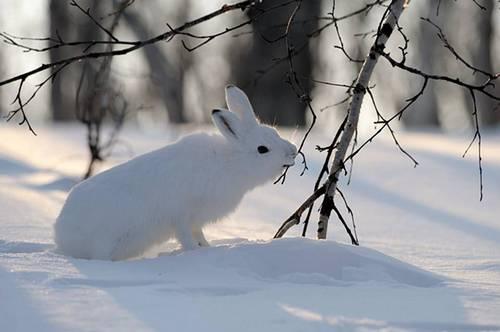 Животное питается зимой картинки