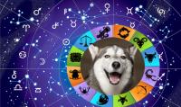 6 причин завести щенка